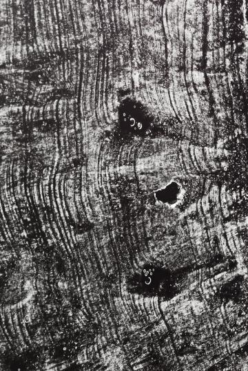 Dove Allouche - Pétrogtaphies RSM_1, tirage argentique, 172 x 125 cm - Courtesy Fondation d'entreprise Ricard