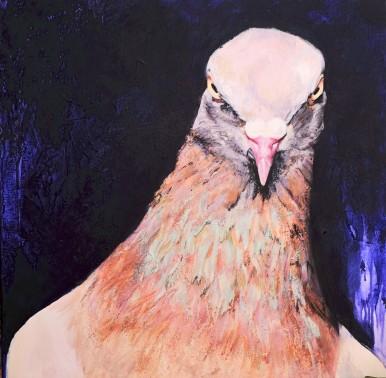 Pigeon_Mai 2016_80x80 cm APGw (1)