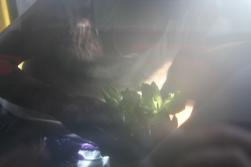 Ne me raconte pas de salades, juin 2016, performance de Fanny Spano et Soar, journée de performance organisée par le collectif Crash Test devant la galerie Eva Vautier, Nice. Courtesy Fanny Spano